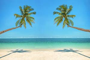 Картинка Тропики Море Побережье Пальмы Горизонт Природа