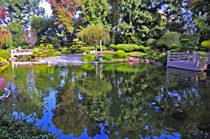 Картинка США Сады Пруд Мосты Калифорния Кусты Деревья Earl Burns Miller Japanese Garden Природа