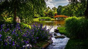 Обои США Сады Пруд Мосты Камни Колокольчики - Цветы Деревья Missouri Botanical Garden