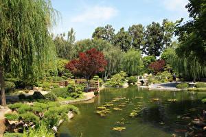 Фото США Сады Пруд Кусты Earl Burns Miller Japanese Garden Природа