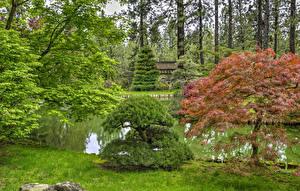 Обои Штаты Сады Пруд Вашингтон Кусты Деревья Spokane Japanese Garden