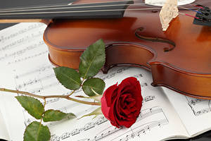 Картинка Скрипки Ноты Розы Красный Цветы