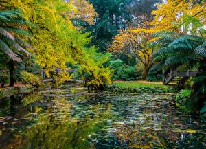 Обои Австралия Парки Осенние Пруд Мосты Дерево Alfred Nicholas Memorial Gardens Природа