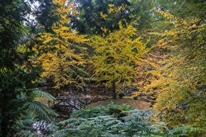 Картинки Австралия Парк Осенние Пруд Мосты Дерево Alfred Nicholas Memorial Gardens Природа
