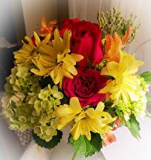 Фотография Букеты Розы Гортензия Хризантемы цветок