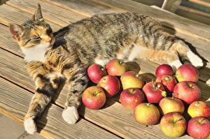 Картинки Коты Яблоки Доски Животные Еда
