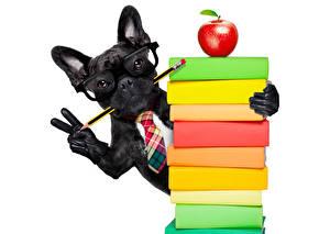 Фотографии Собаки Яблоки Пальцы Белый фон Бульдог Черные Книга Очки Карандаши Перчатках животное