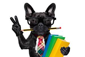 Фотографии Собаки Французский бульдог Пальцы Белый фон Черный Очки Карандаши Книга Галстук Перчатки Забавные Животные