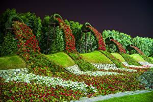 Картинки Дубай Сады Петунья Дизайн Miracle Garden Природа