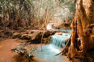 Фото Леса Водопады Осенние Ствол дерева Природа