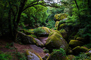 Фотография Франция Леса Камень Деревья Мох Huelgoat Forest Природа