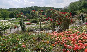 Обои Германия Мюнхен Парки Розы Westpark Природа