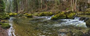 Фото Германия Речка Леса Камни Бавария Мох Riedis Природа