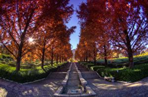 Фотография Япония Осенние Парки Деревья Лестница Кусты Minobu-cho Yamanashi Prefecture Природа