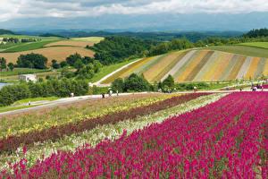 Картинки Япония Поля Hokkaido Природа