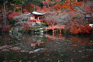 Обои Япония Киото Осень Парки Пруд Мосты Пагоды Природа картинки