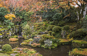 Обои Япония Киото Парки Осенние Пруд Мох Кусты Листья Природа