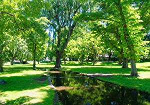 Картинки Япония Парки Пруд Деревья Газон Garden in the Hokkaido University Природа