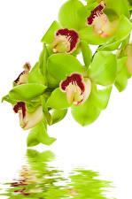 Фотография Орхидеи Вода Вблизи Белый фон Цветы