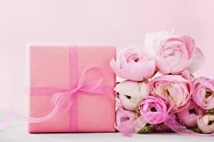 Обои Лютик Цветной фон Розовый Подарки Бантик Цветы