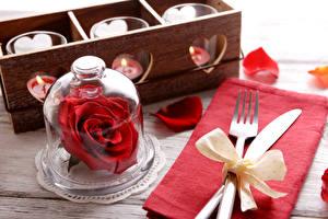 Обои Роза Нож Красный Лепестки Вилка столовая Бант Цветы