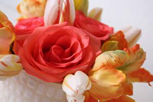 Обои Розы Тюльпаны Вблизи