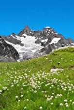 Обои Швейцария Горы Одуванчики Альпы Трава Природа