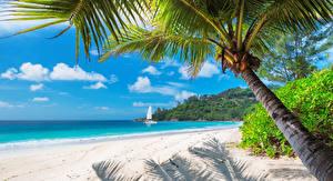 Фотографии Тропики Берег Песок Пальмы Пляж