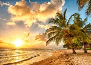 Фотография Тропики Побережье Рассветы и закаты Небо Пальмы Облака Barbados Caribbean Природа