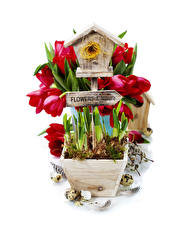Фото Тюльпаны Перья Белым фоном Гнезде Яйцо Цветы