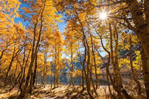 Картинка США Осенние Озеро Калифорния Деревья Лучи света June Lake Природа