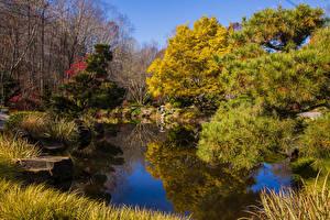 Обои США Осень Парки Пруд Деревья Ель Gibbs Gardens Природа картинки