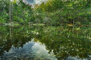 Обои США Леса Озеро Отражение Roaring Brook Nature Center Природа картинки