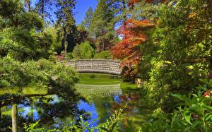 Фото Штаты Сады Пруд Мосты Вашингтон Ель Дизайн Spokane Japanese Garden Природа