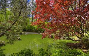 Обои США Сады Пруд Вашингтон Ветки Spokane Japanese Garden Природа