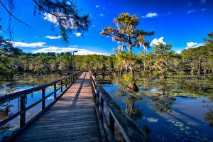 Картинки Штаты Озеро Мосты Техас Ограда Caddo Lake Природа