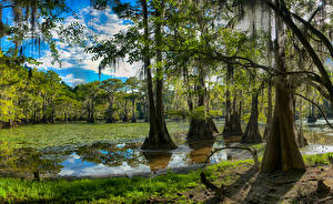Обои США Озеро Леса Техас Деревья Caddo Lake Природа