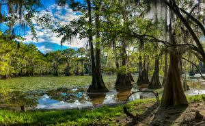 Обои США Озеро Леса Техас Деревья Caddo Lake