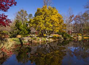 Фотографии США Парки Осенние Пруд Деревья Gibbs Gardens