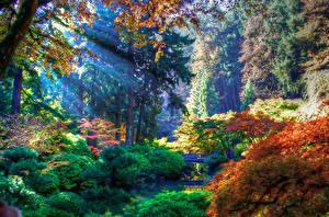 Фото Штаты Парки Осенние Кусты Деревья Portland Oregon