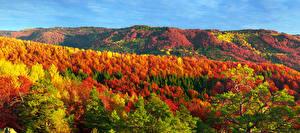 Фотография Украина Горы Леса Осень Закарпатье Природа