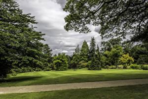 Обои Великобритания Парки Газон Деревья Ветки Garden Harlow Carr Природа картинки