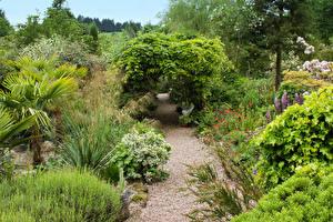 Фото Великобритания Парк Кусты Деревьев Mount Pleasant gardens Kelsall Природа