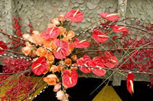 Картинки Антуриум Розы Ягоды Ветвь