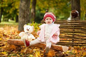 Картинки Осенние Плюшевый мишка Девочки Взгляд Сидящие Шапки Дети