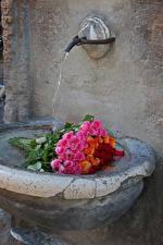 Фото Букеты Розы Вода