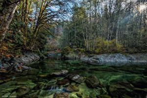 Фото Канада Леса Речка Камень Мох Лучи света Little Nitinat River Природа