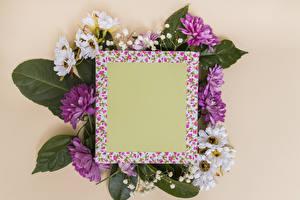 Фотографии Хризантемы Цветной фон Шаблон поздравительной открытки
