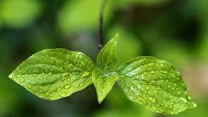 Фотографии Крупным планом Листва Капли Зеленый Природа