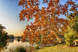 Фотография Чехия Осенние Река Дерево Lednice Природа